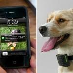 dog_caller_collar_01