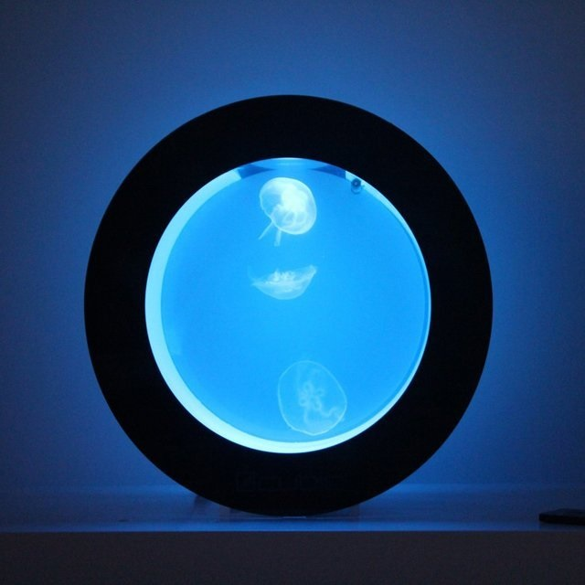 Orbit 20 Desktop Jellyfish Aquarium Tank
